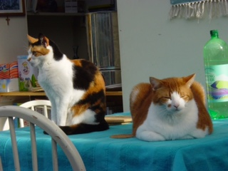 Daisy and Fat cat