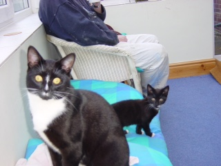 Charlie and Poppy as kittens